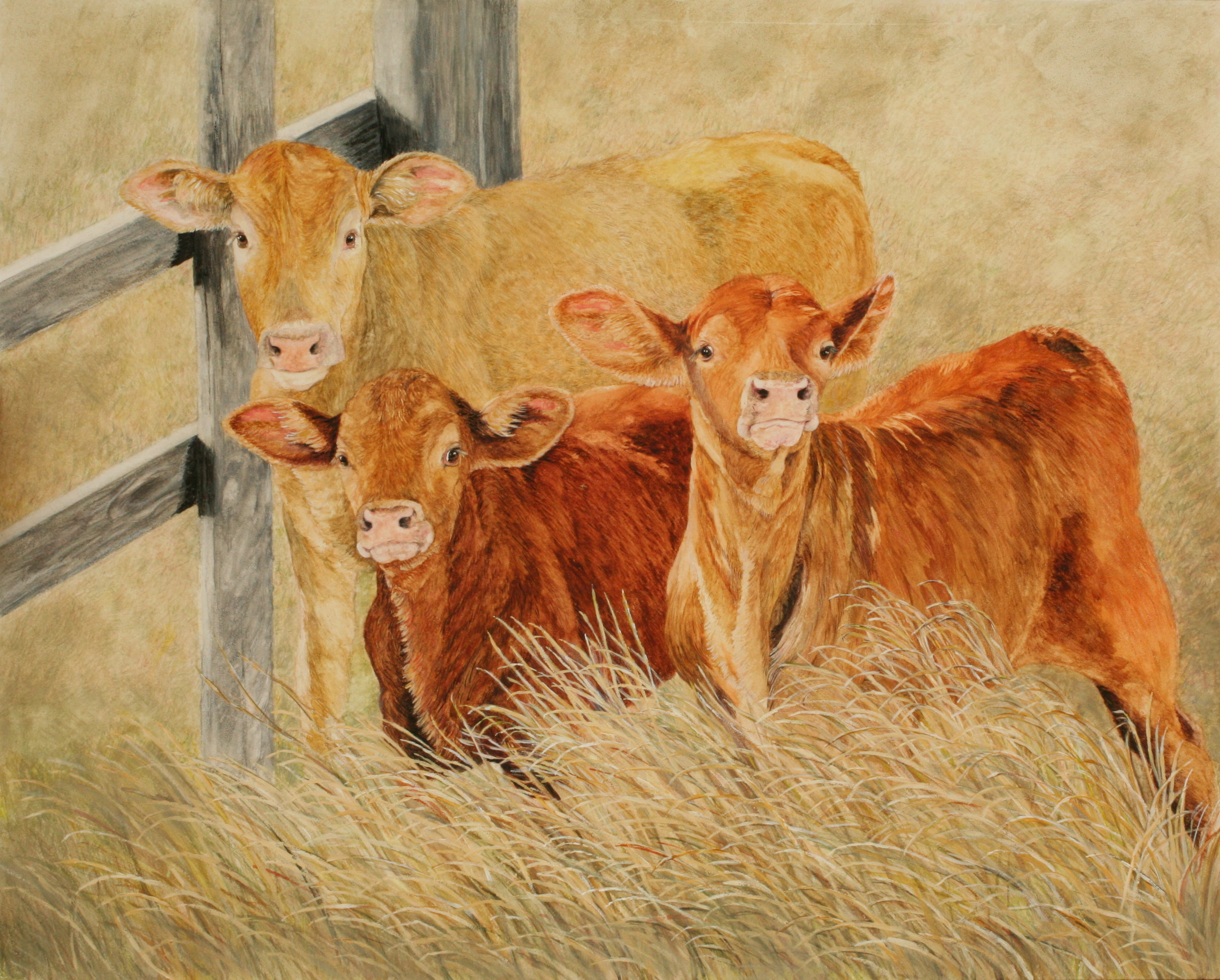 cows | Dana Spring Parish - Artist