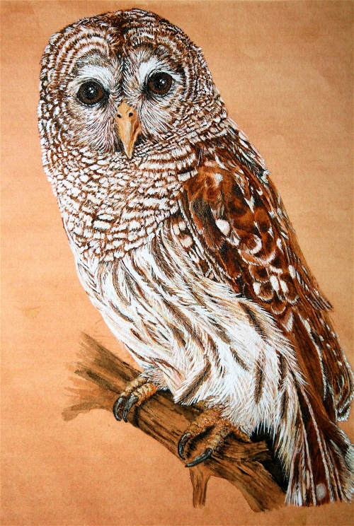 watercolor painting of Barred Owl