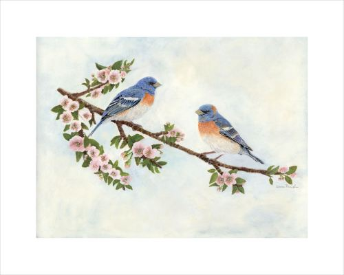 Lazuli Buntings on an Apple Blossom Branch